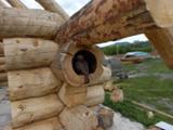 null - Casa Di Tronchi (Canadese) Cedar, Deodar Resinosi Asiatici