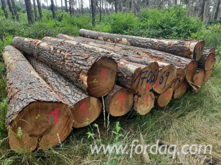 Pine-Sawn-Logs