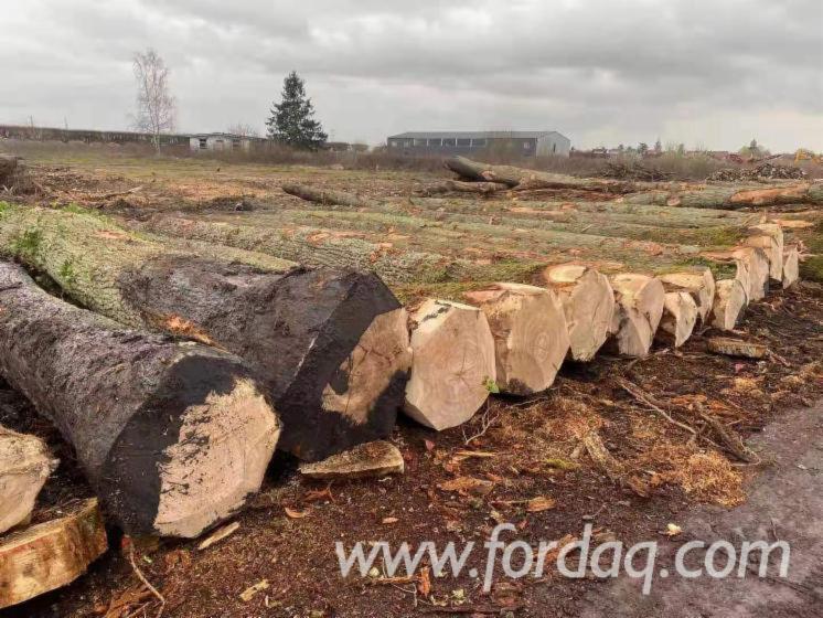 Purchasing-Beech---White-Oak-Sawn-Logs