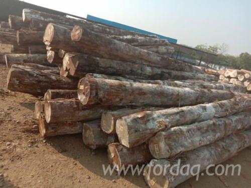 Teak-Industrial-Logs