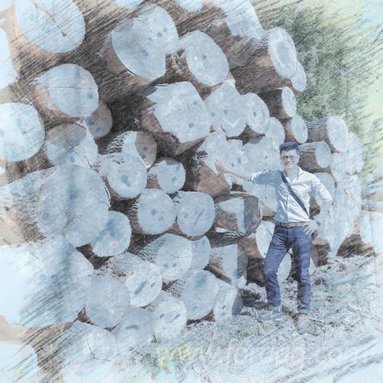 Oak-Veneer-Logs