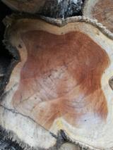 null - Exportamos madera de Teca/Teak