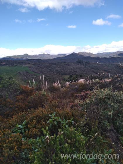 Madeira-Plantada-%C3%80-Venda-Equador