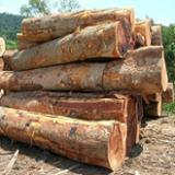 null - Schnittholzstämme, Bubinga , Sapelli , Teak