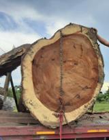 null - Teak Industrial Logs, 15-80 cm Diameter