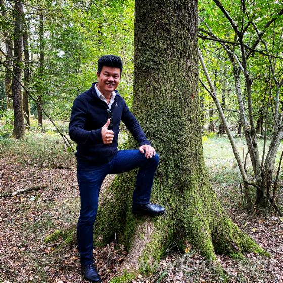 Buying-Oak-Sawn-Logs