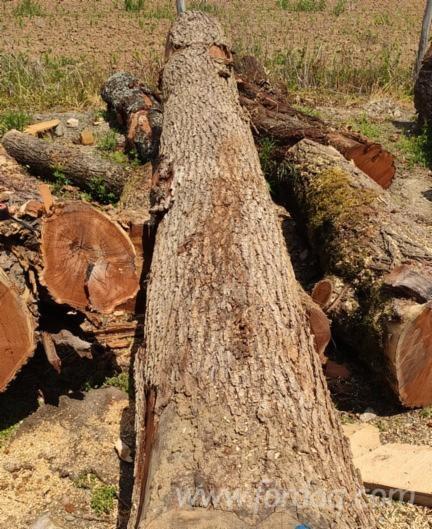 Elm-Sawn-Logs