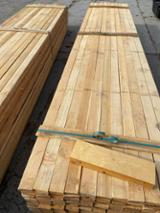 null - Siberian Larch from Russia