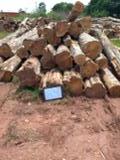 null - Old Growth Teak / Tectona Grandis Sawn Logs, 60+ cm