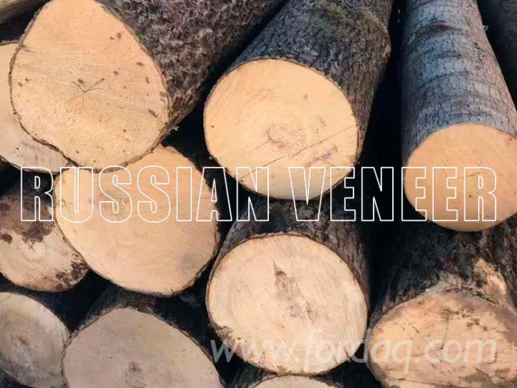 Aspen---Poplar-Veneer-Logs-18-