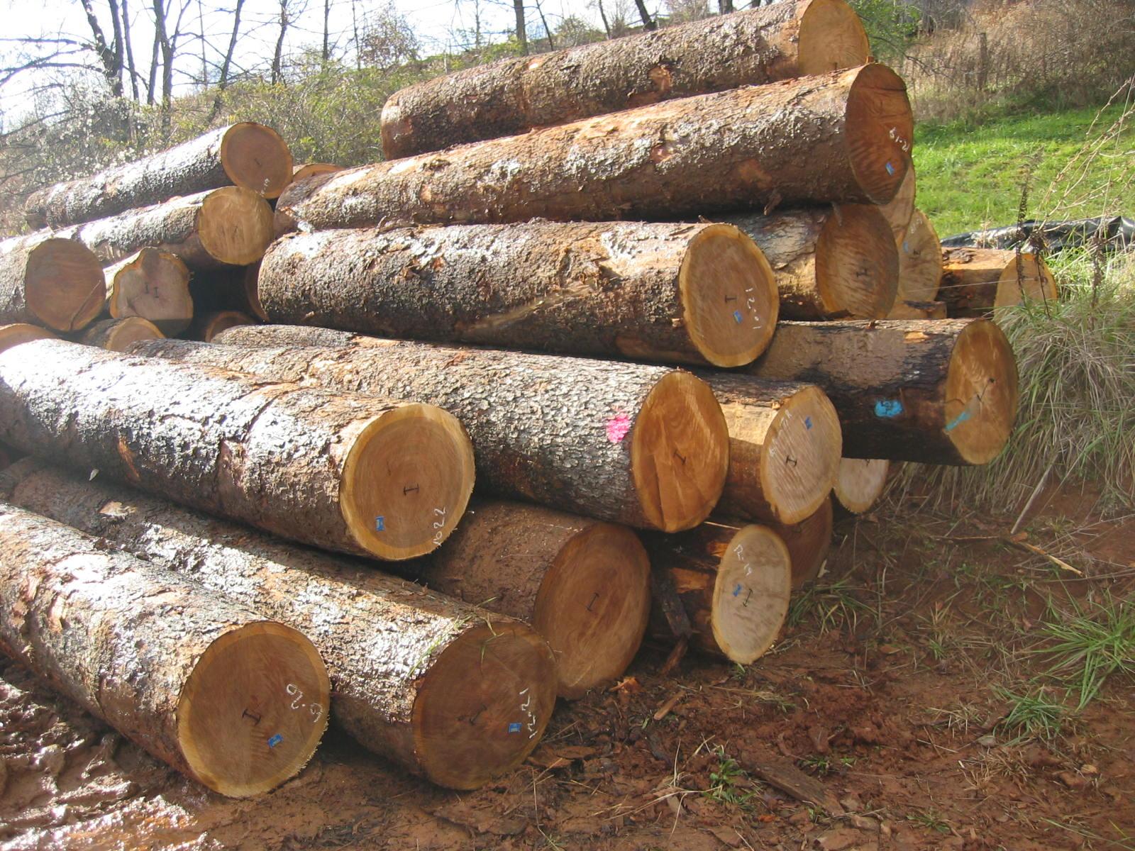 Fotos de troncos taringa for Fotos en madera