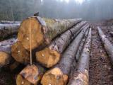 Softwood  Logs ISO-9000 For Sale - Saw Logs, Spruce (Picea abies) - Whitewood, PEFC/FFC