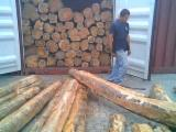 Half-edged boards, Teak, Ecuador