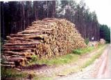Grumes Résineux Southern Yellow Pine à vendre - Vend Grumes De Sciage Southern Yellow Pine PEFC/FFC Paranagua