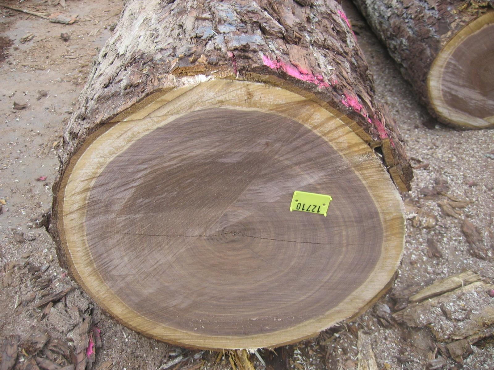 单板级原木, 胡桃木(美洲黑色), 美国