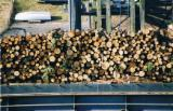Stämme Für Die Industrie, Faserholz Weichholz  Zu Verkaufen - Stämme Für Die Industrie, Faserholz, Kiefer  - Rotholz