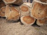 Grumes Feuillus Eucalyptus - Vend Grumes De Sciage Eucalyptus ISO-14001
