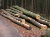 Hardwood  Logs China - Saw Logs, Beech (Europe)