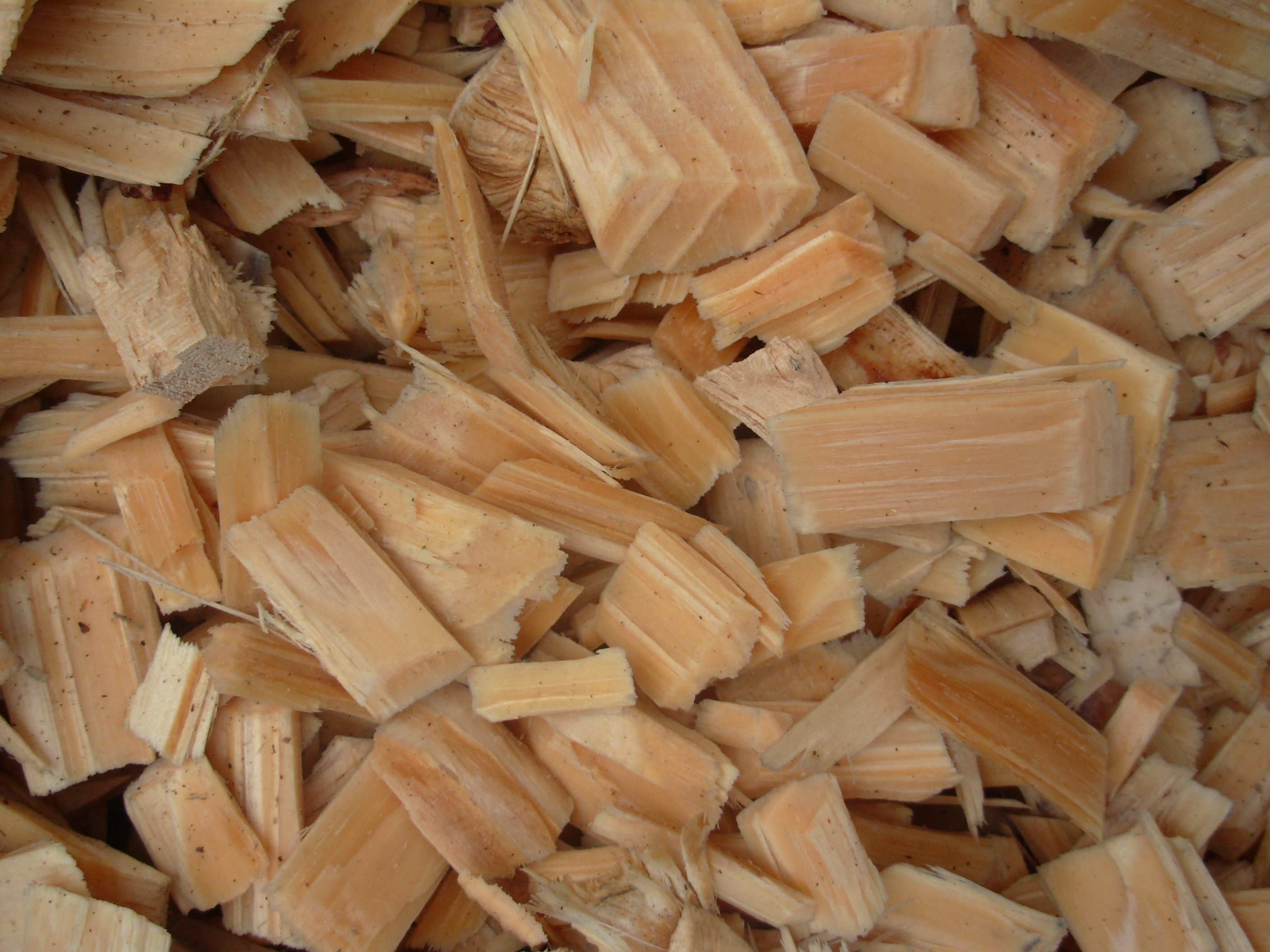Wood chips from sawmill pine radiata
