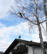 Forstlichen Dienstleistungen Deutschland - Motormanueller Holzeinschlag, Deutschland