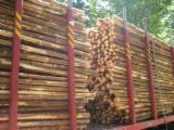 Softwood  Logs Germany - Saw Logs, Pine (Pinus sylvestris) - Redwood