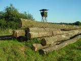 Hardwood  Logs China - Saw Logs, Oak (European)