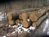Hardwood - Square-Edged Sawn Timber - Lumber  Supplies Germany Saw Logs, Oak (European)