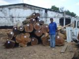 Colombia Hardwood Logs - 25 mm Saw Logs from Colombia, Cartagena