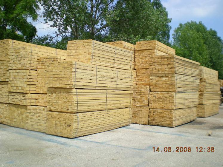 Spruce-%28Picea-abies%29--