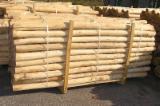 Hardwood  Logs For Sale Poland - Poles, Acacia