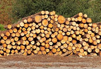 Troncos-de-madeira-macia