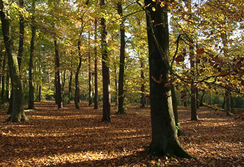 Waldgebiete