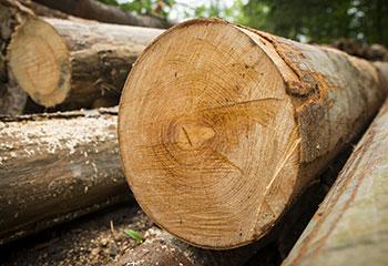 Troncos-de-madeira-maci%C3%A7a
