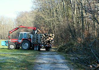 Forstliche-Dienstleistungen
